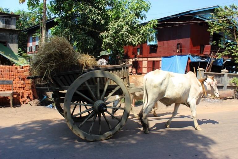 Bilu Kyun Ogre Island Myanmar Mawlamyine Cow