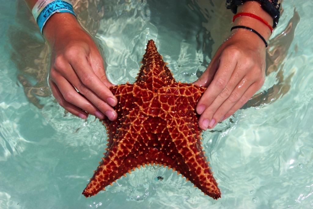 San Blas star fish