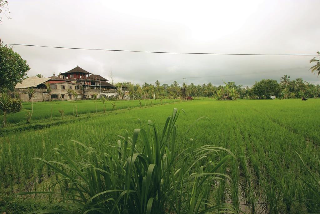 Rice field Bali rijstvelden