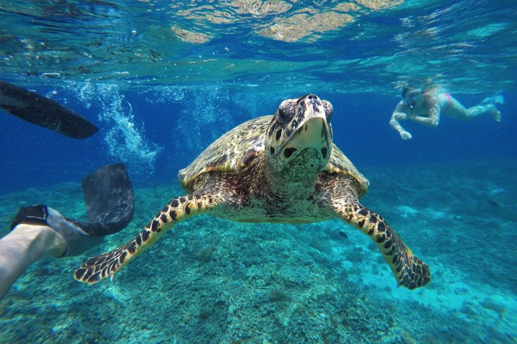 Snorkel Turtle Gili Trawangan