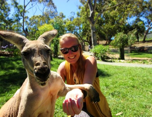 Kangaroo Gorge Wildlife Park Four Months Traveling