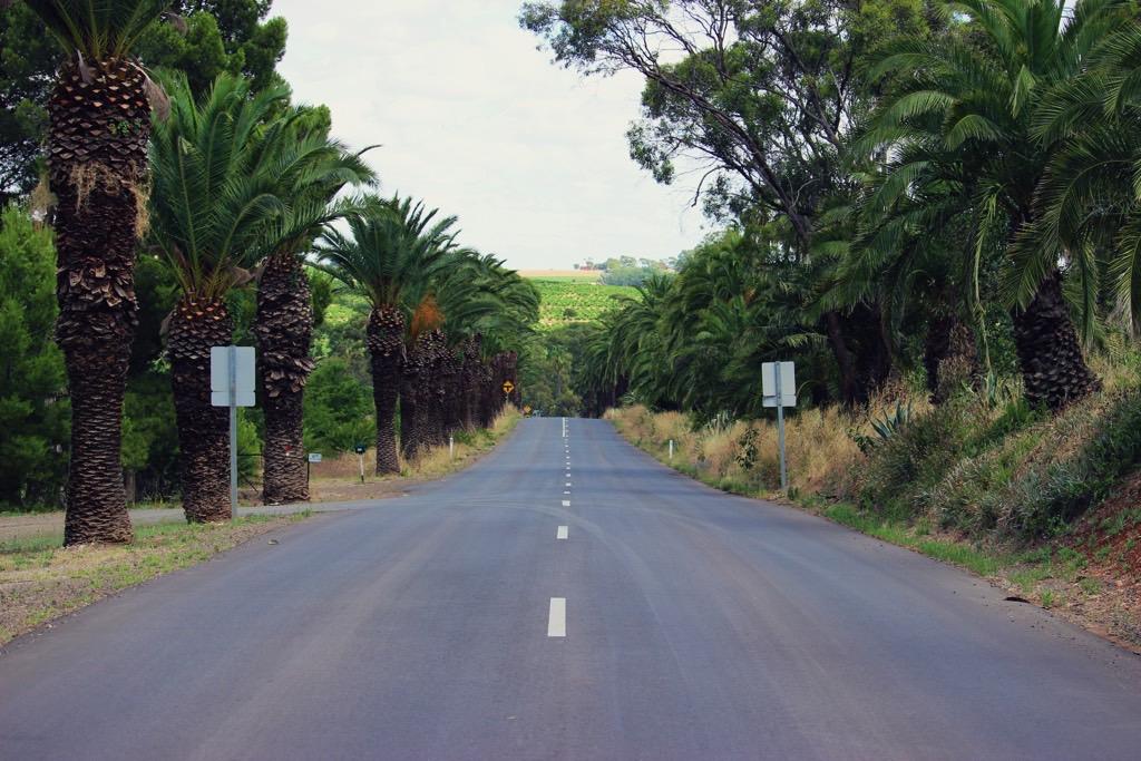 reisplannen Barossa Valley Palm Trees South Australia