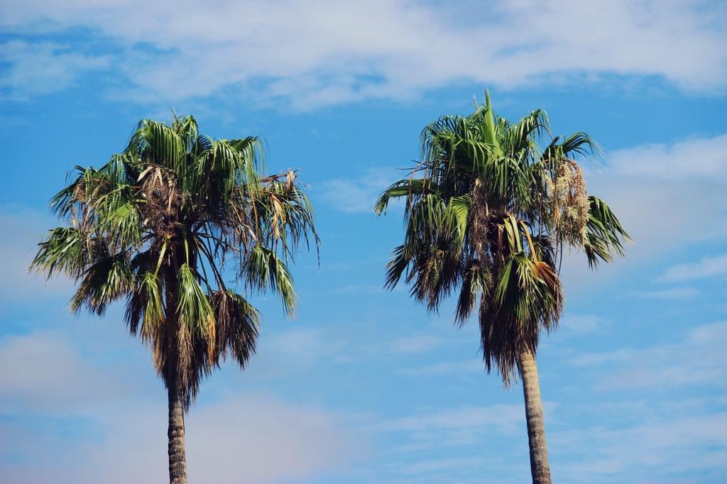 The Wandering Mind travel plans plannen Barossa Valley Palm Tree