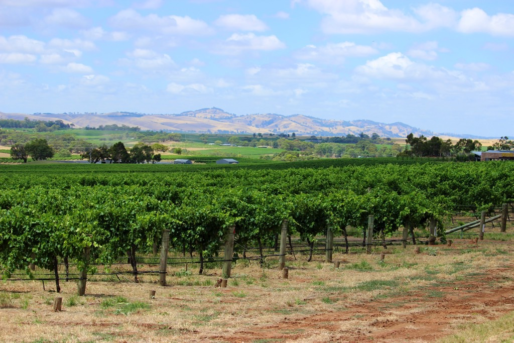 Travel Diary Barossa Valley South Australia