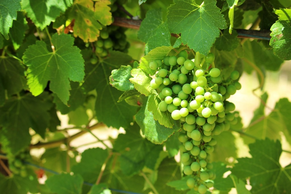 Travel Diary Barossa Valley Wine