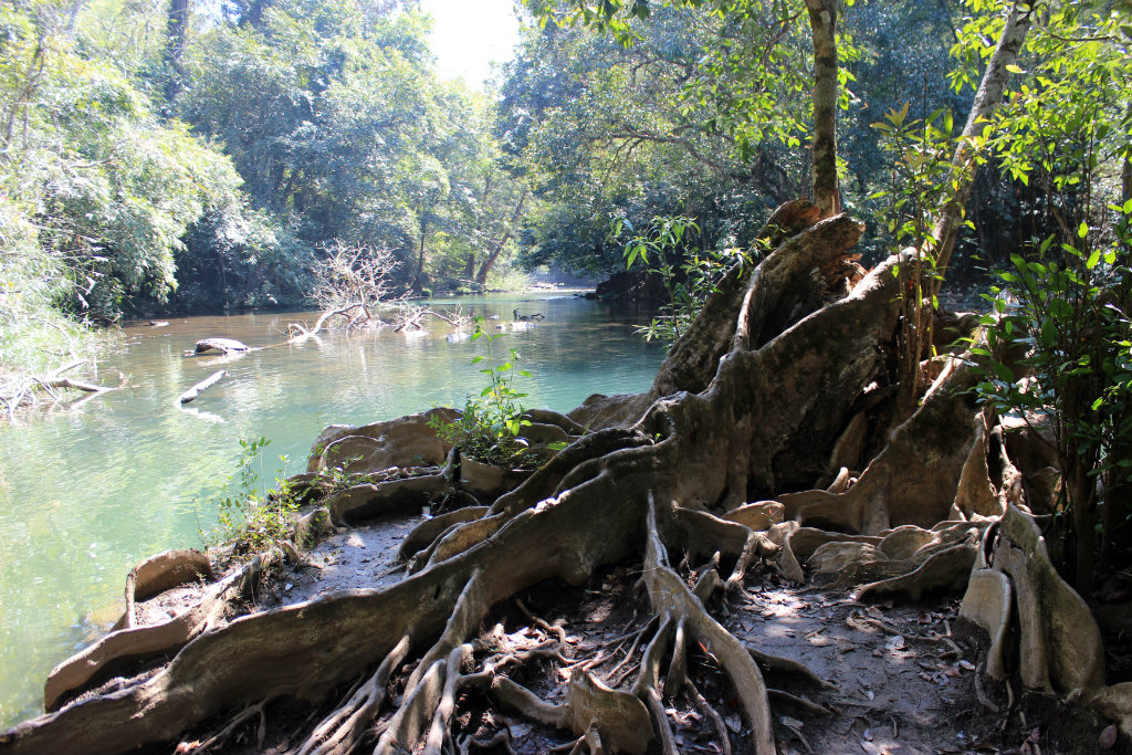 Itinerary for Thailand | Jungle trekking