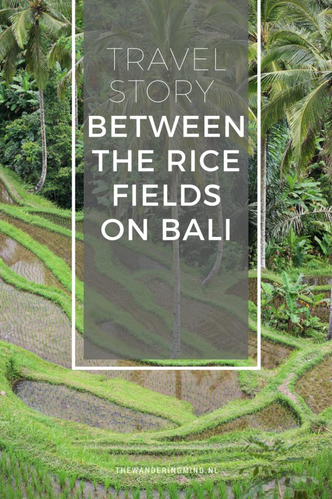 Rice fields on Bali