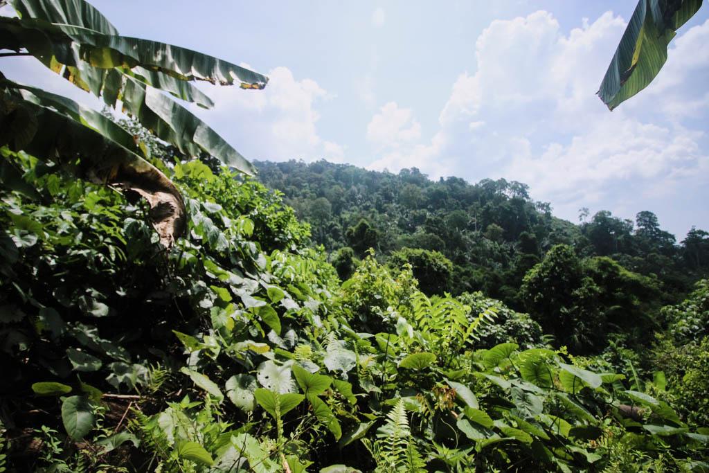 Jungle Pulau Tioman