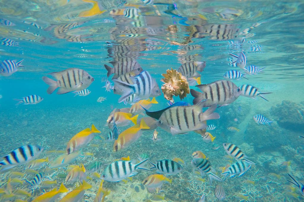 Snorkelen Koh Tao