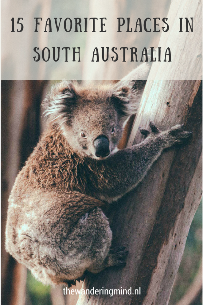 15 favorite places | South Australia | Australia | Koala | Zuid-Australië | Road trip Australia | Backpacking Australia