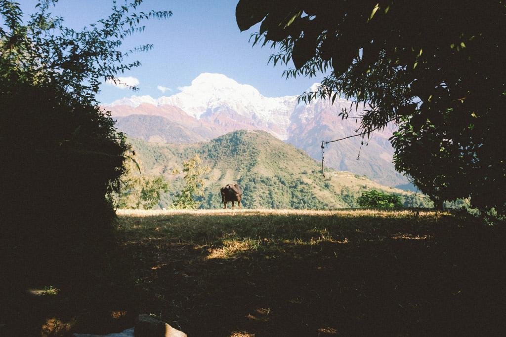 Gnoe | Nepal