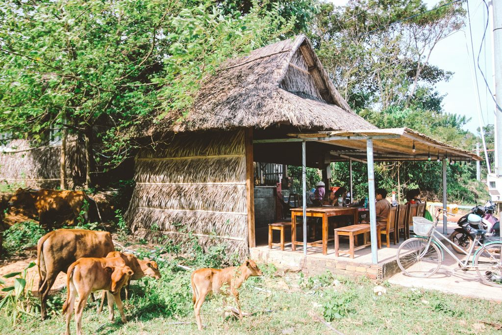 Island Life | Hostel | Phu Quoc | Vietnam