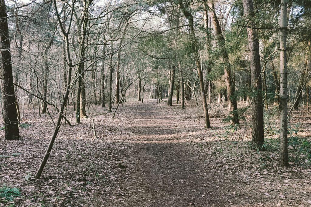 Bijkletsen | Bos | Natuur | Oosterhout | Katjeskelder