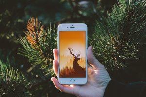 Wildfulness | Wild Ventures | Zen | Meditiatie