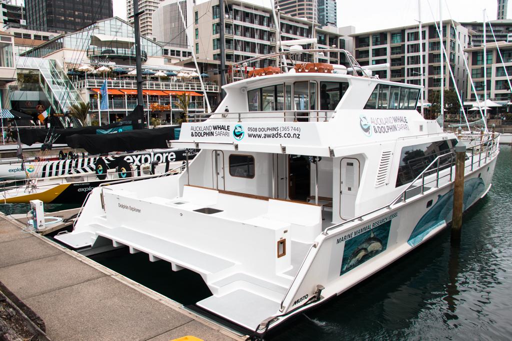 Auckland Whale & Dolphin Safari | Nieuw-Zeeland