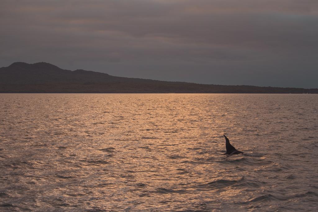 Zonsondergang | Orka | Auckland | Nieuw-Zeeland | Rangitoto