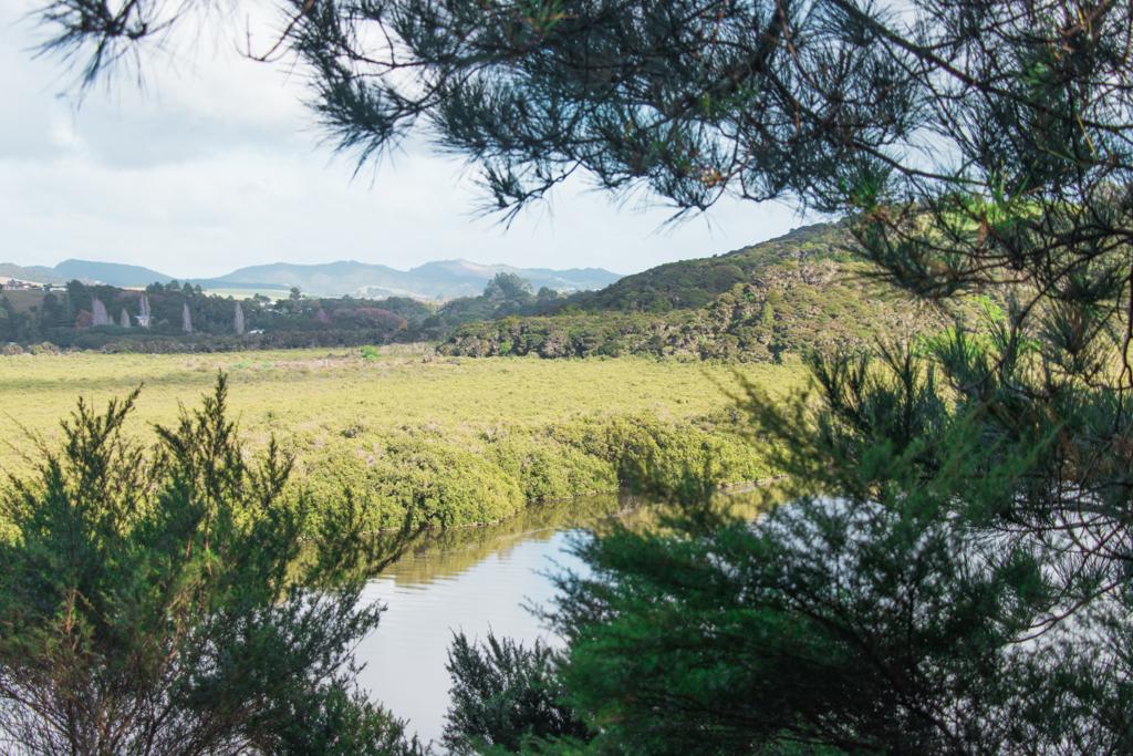 Mangrove Forest Paihia | Bay of Islands | Haruku Falls | Hiken in Nieuw-Zeeland