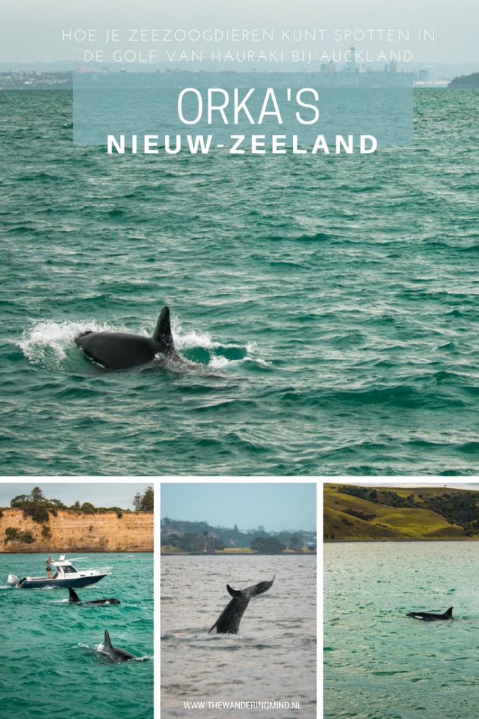 Zeezoogdieren | Orka's | Walvissen | Dolfijnen | Golf van Hauraki | Auckland | Nieuw-Zeeland