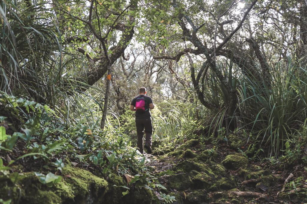 Kowhai Grove | Rangitoto Island | Auckland | Noordereiland | Nieuw-Zeeland