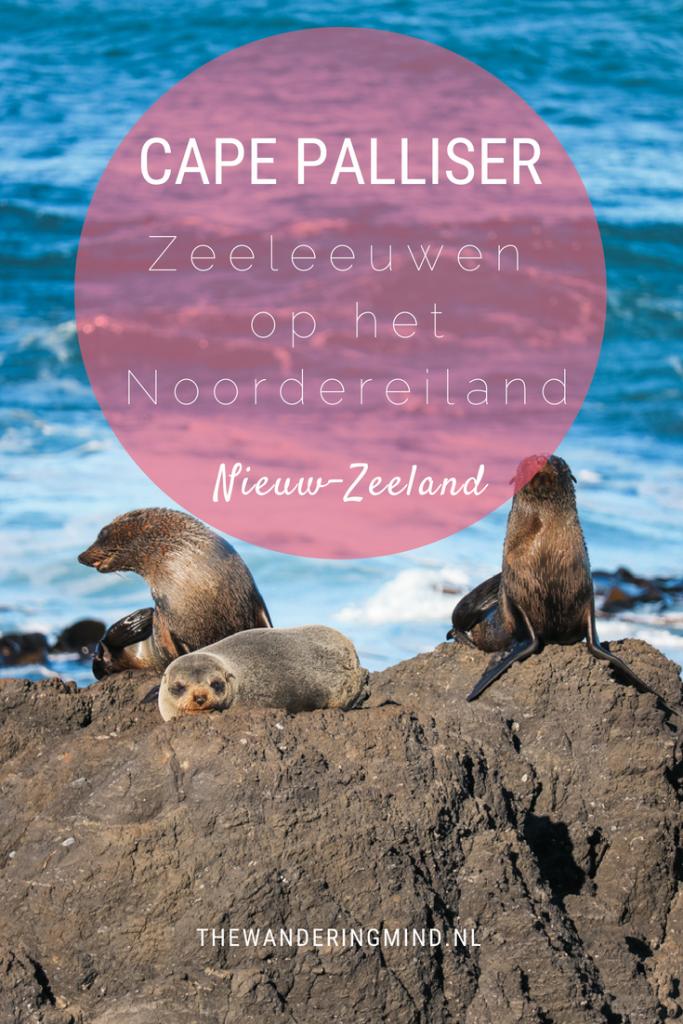 Zeeleeuwen | Nieuw-Zeeland | Noordereiland | Nieuw-Zeeland | Wildlife | Wellington