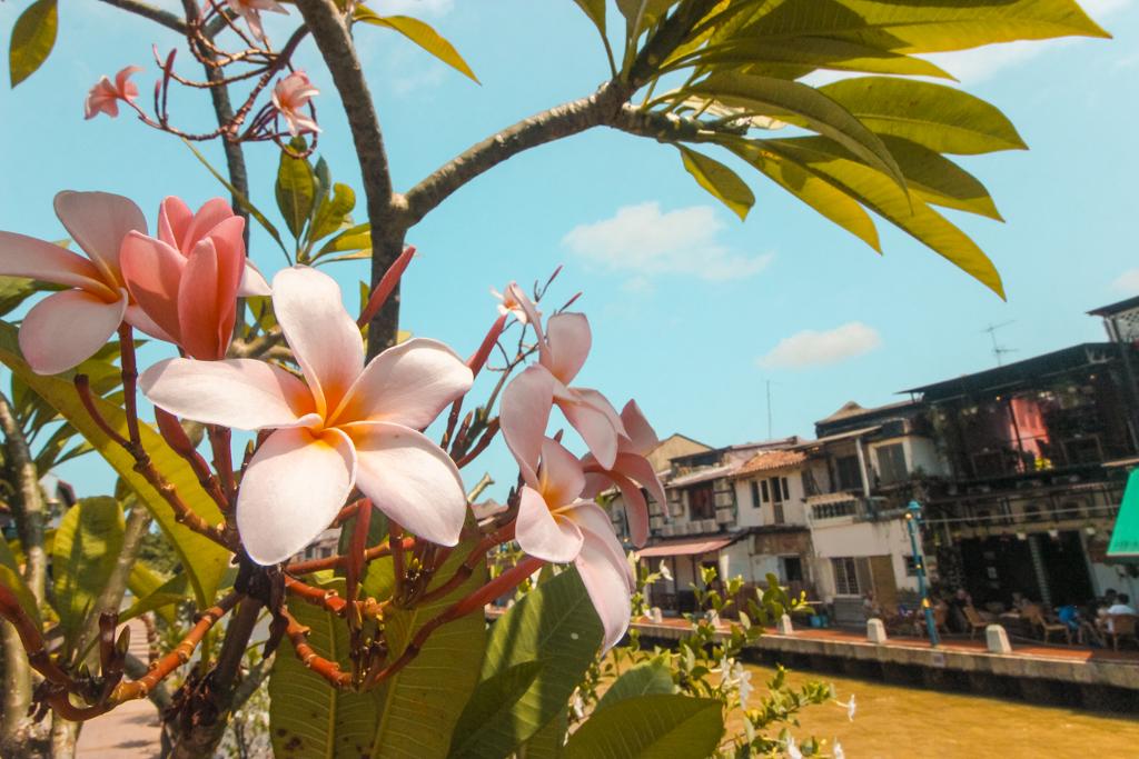 Doen in Melaka | Bezienswaardigheden Melaka | Malakka | Malacca | Maleisië | Rondreis Maleisië | Zuidoost-Azië