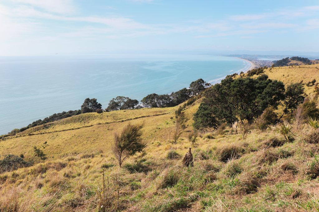 Noordereiland Highlights   Nieuw-Zeeland   East Cape