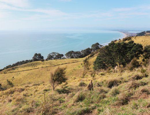 Noordereiland Highlights | Nieuw-Zeeland | East Cape