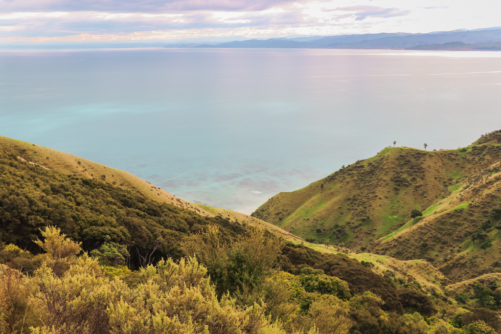 Highlight Noordereiland   oostkust Nieuw-Zeeland   Mahia Peninsula