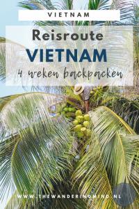 Man plukt groene kokosnoot in palmboom.