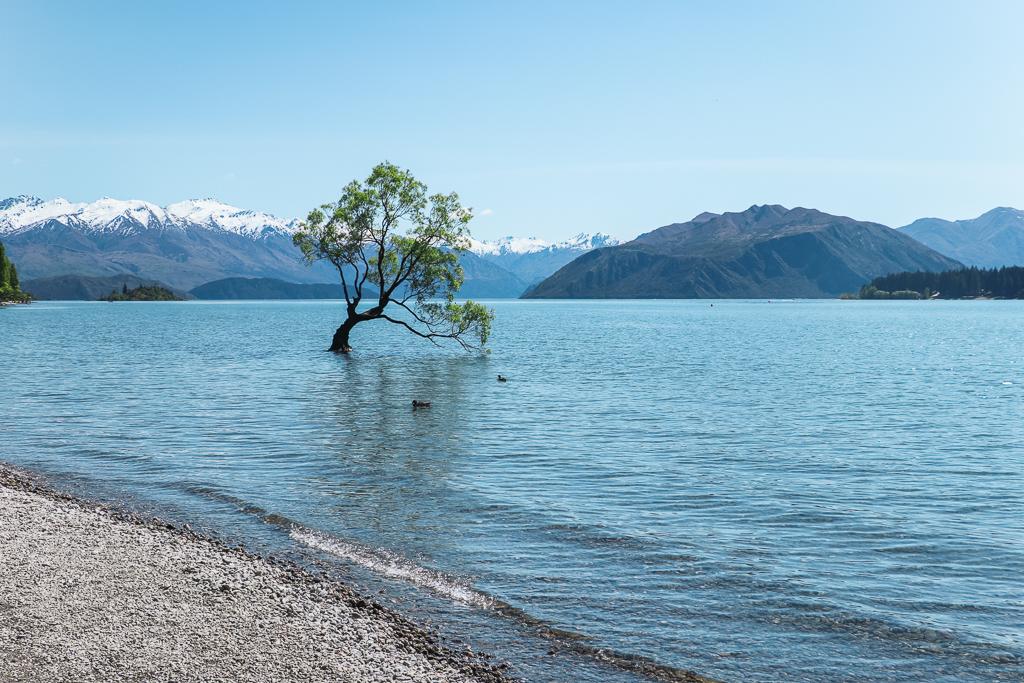 That Wanaka Tree in het meer van Wanaka