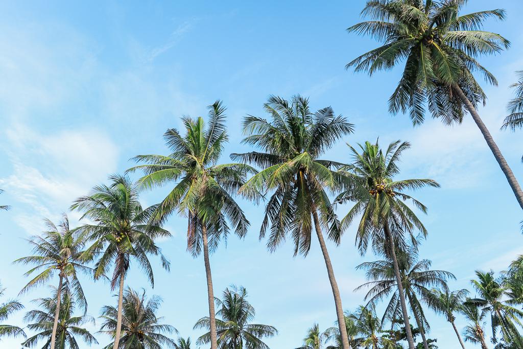 Palmbomen op Koh Lanta tegen een strakblauwe lucht.