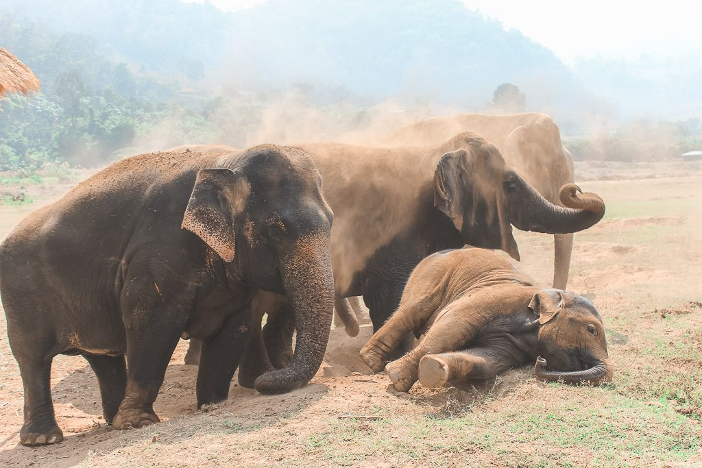 Groep olifanten in zand.