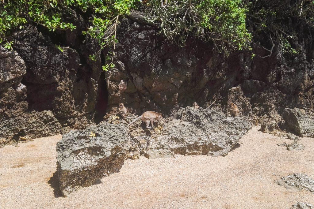 Apen op grijze rotsen op zandstrand Koh Talabeng.