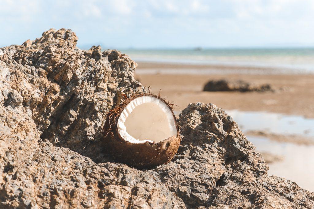 Open kokosnoot op rots.