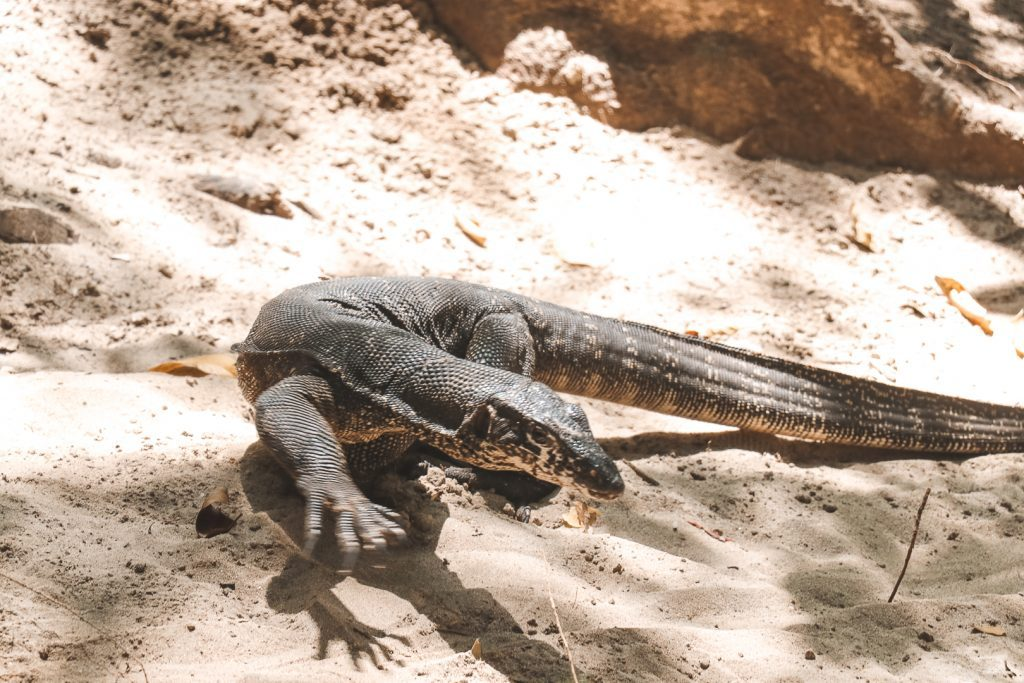 Varaan op zandgrond bij Puerto Princesa.