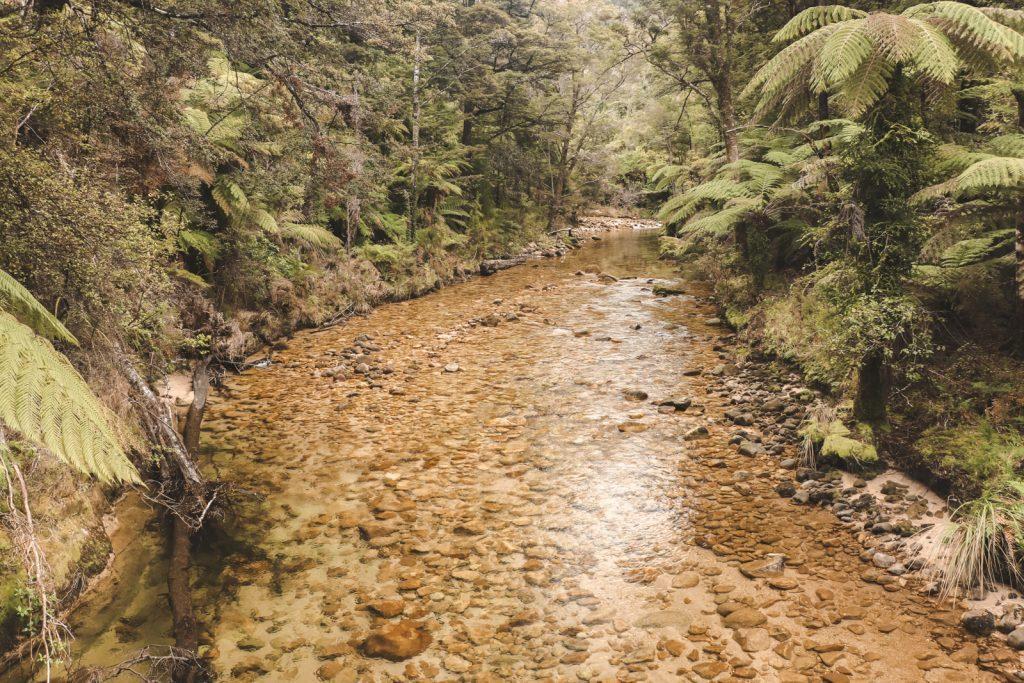 Helder water omringd door groene bomen.