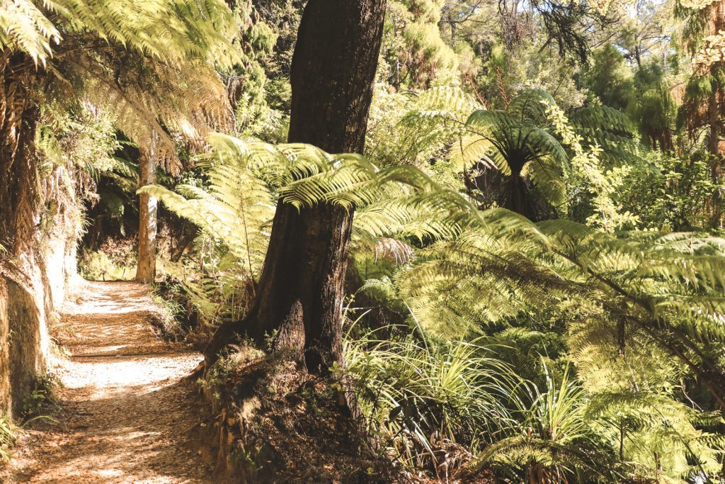 Groene planten in Nieuw-Zeeland