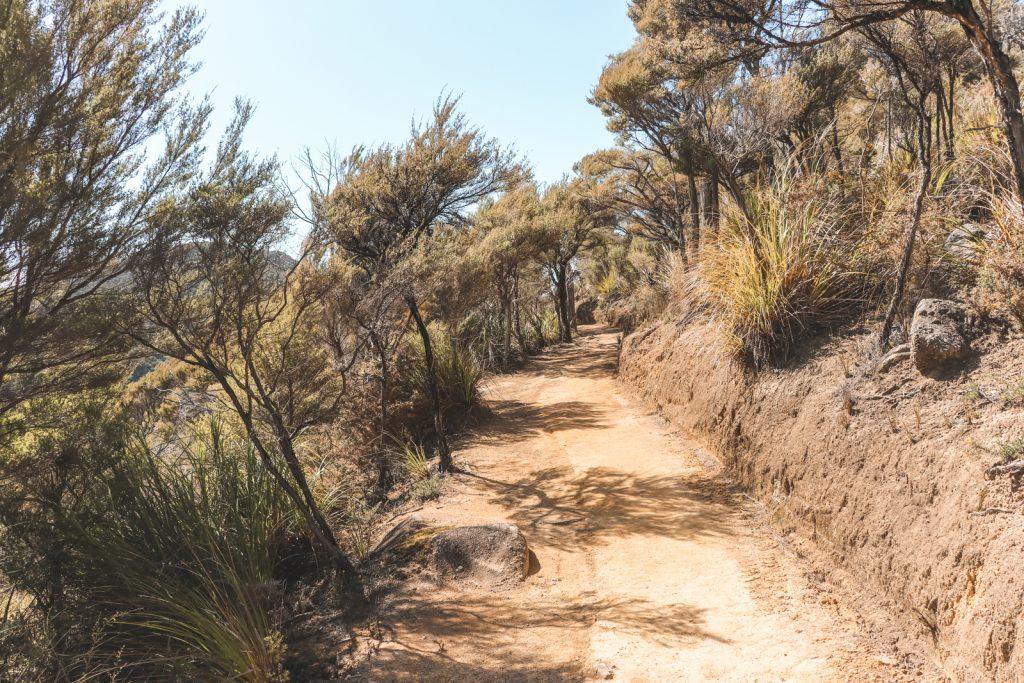 Zandpad omringd door droge bomen in Nieuw-Zeeland.