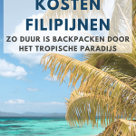 Palmboom op wit strand