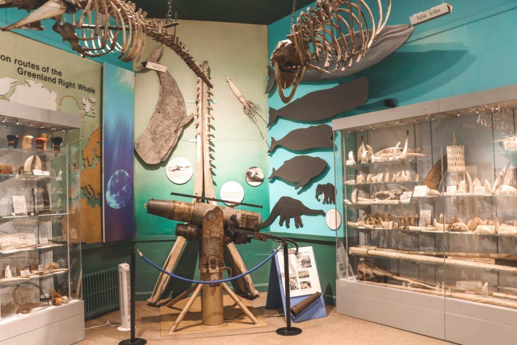Tentoonstelling over walvissen maritiem museum Hull
