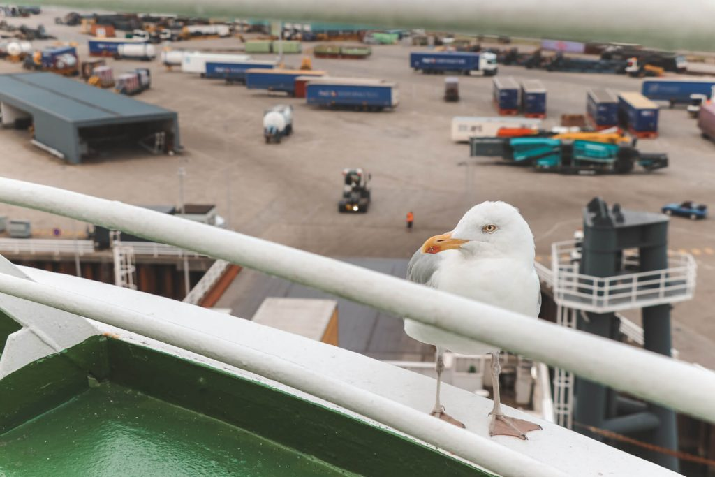 Een meeuw op de boot naar Engeland