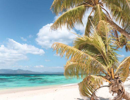 Palmboom op wit strand Filipijnen