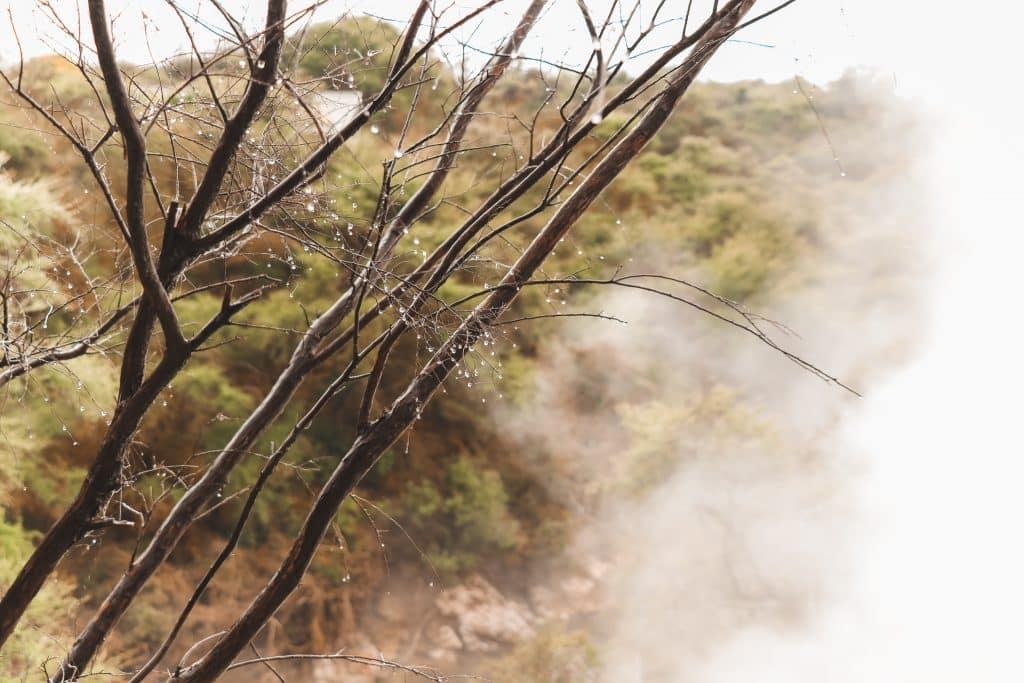 Boom met waterdruppels en stoom op achtergrond